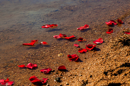 in loved: Rose petals washing up on the shore of a lake after they were scattered along with the ashes of a loved one.