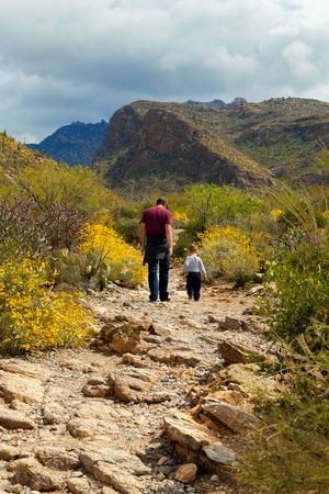 plantas del desierto: Un padre y su joven hijo van de excursión en el desierto de Arizona, mientras que las plantas del desierto florecen alrededor de ellos. Foto de archivo