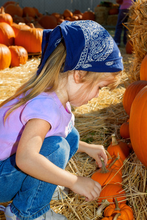 A young girl chooses a tiny pumpkin from a row in a pumpkin patch covered in straw and gourds. Stock Photo