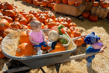 A small girl struggles to push her baby sister in a wheelbarrow full of gourds.; It is way too heavy for her. The two are in a pumpkin patch filled with pumpkins and hay.