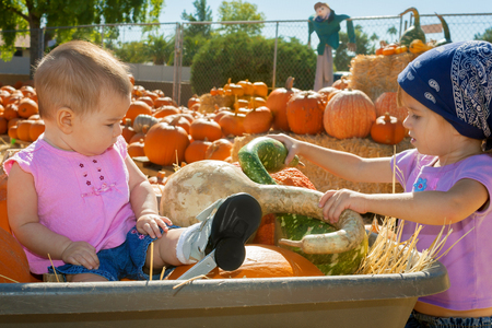 Sisters in a pumpkin patch inspect gourds.  Both are young and the toddler is sitting in a wheelbarrow amongst the produce.  She is wearing special shoes for her clubfoot. Stock Photo