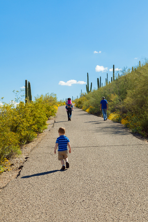 Three generations, a grandfather, father, and two children, hike up the paved path of a desert mountain in full bloom.  There are saguaro cacti on both sides of the path.  The father is carrying his daughter on his back and the youngest child dawdles behind the rest. Stock Photo