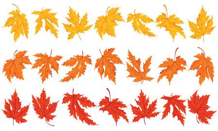 Maple leaves colored  Design elements  Illustration