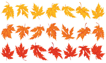 Maple leaves colored  Design elements  Illustration