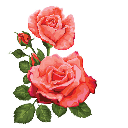 Pink  vintage roses  Vector illustration