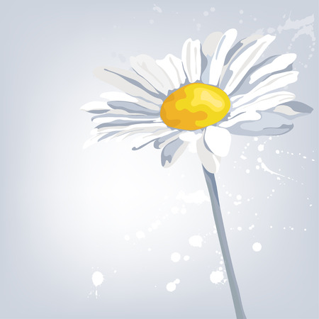 Abstract card with camomile flower