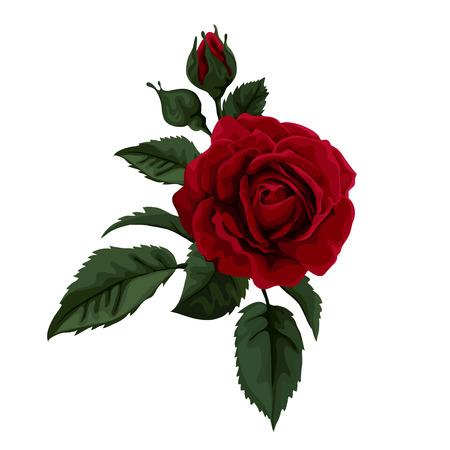 stem: Belle rose, isolé sur blanc. Parfait pour le fond des cartes de v?ux et des invitations de mariage, anniversaire, Saint-Valentin