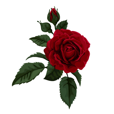 Beautiful rose isolated on white. Perfect for background greeting cards and invitations of the wedding, birthday, Valentine\\