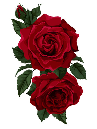Beautiful bouquet of red  roses isolated on white. Perfect for background greeting cards and invitations of the wedding, birthday, Valentine Imagens - 34622922