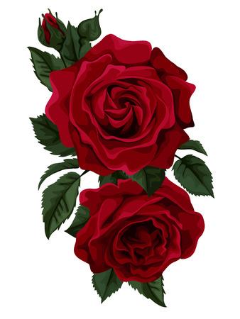 rojo: Hermoso ramo de rosas rojas aisladas en blanco. Perfecto para las tarjetas de felicitación de fondo y las invitaciones de la boda, cumpleaños, día de San Valentín
