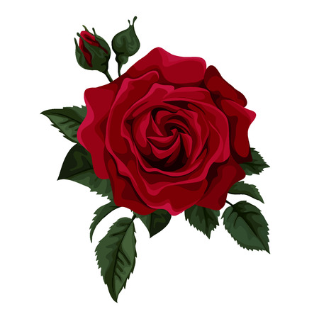 green and red: Beautiful red rose isolated on white. Perfect for background greeting cards and invitations of the wedding, birthday, Valentine Illustration