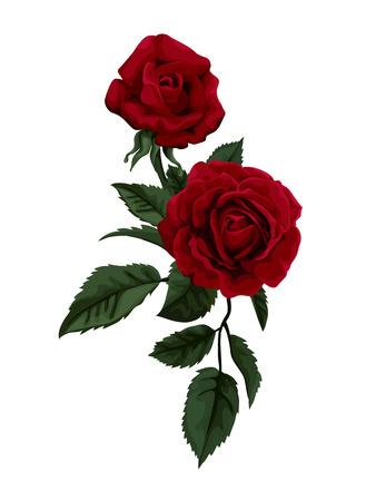 Magnifique bouquet de roses rouges isolé sur blanc. Parfait pour le fond des cartes de v?ux et des invitations de mariage, anniversaire, Saint-Valentin  Illustration