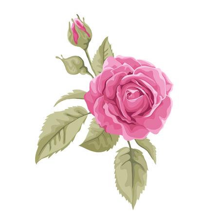 흰색, 파스텔 색상에 격리하는 아름 다운 로즈. 배경 인사 장 및 결혼식, 생일, 발렌타인 초대장을위한 완벽 한  일러스트