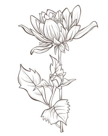 달리아 꽃은 흰색 배경에 고립입니다. 일러스트