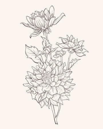dahlia: flor de la dalia aislado en fondo blanco. Vectores