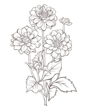 dahlia  flower  isolated on white background. Illustration