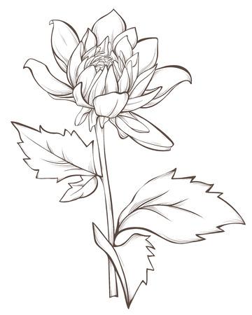 dahlia bloem op een witte achtergrond.