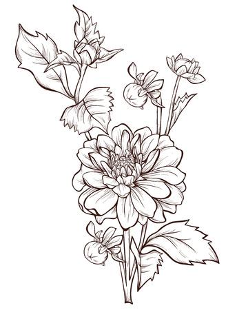 벡터 달리아 꽃은 흰색 배경에 고립입니다. 디자인 요소입니다. 손으로 그린 등고선과 뇌졸중.