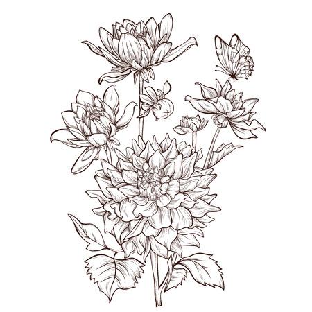 dahlia: La flor del vector dalia aislado en fondo blanco con la mariposa. Elemento para el diseño. Dibujado a mano las líneas de contorno y accidentes cerebrovasculares. Vectores
