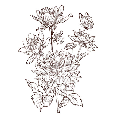 Vector dahlia flower isolated on white background with butterfly.  Element for design. Hand-drawn contour lines and strokes. Illustration