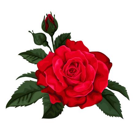tallo: Tarjeta de felicitaci�n floral con rosas y marco. Fondo con lunares. Perfecto para las tarjetas de felicitaci�n e invitaciones de la boda, cumplea�os, d�a de San Valent�n, D�a de la Madre Vectores
