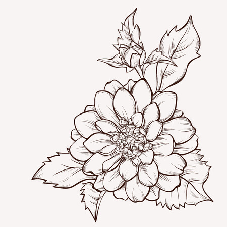dahlia: La flor del vector dalia aislado en fondo blanco. Elemento para el diseño. Dibujado a mano las líneas de contorno y accidentes cerebrovasculares.