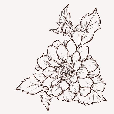 Vector dahlia bloem op een witte achtergrond. Element voor ontwerp. Handgetekende contourlijnen en beroertes.