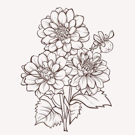 ベクトル ダリアの花は白い背景に分離されました。デザインの要素です。手描きの輪郭線とストローク。