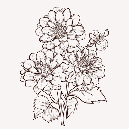 La flor del vector dalia aislado en fondo blanco. Elemento para el diseño. Dibujado a mano las líneas de contorno y accidentes cerebrovasculares. Foto de archivo - 36371741