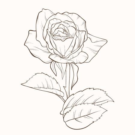 예술, 배경, 아름다운, 아름다움, 꽃, 꽃, 꽃 봉 오리, 카드, 컨투어, 하루, 장식, 장식, 장식, 디자인, 상세한, 그리기, 그린, 우아함, 우아한, 요소, 꽃, 꽃