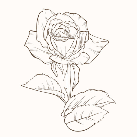 li: art, background, beautiful, beauty, bloom, blossom, bud, card, contour, day, decor, decoration, decorative, design, detailed, drawing, drawn, elegance, elegant, element, floral, flower, freehand, graphic, hand, illustration, image, ink, isolated, leaf, li