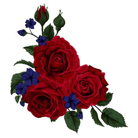 Beautiful rose isolated on white.