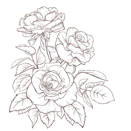 Blossoming roses with spring flowers on white. Vector illustration. Perfect for background greeting cards and invitations of the wedding, birthday, Valentine