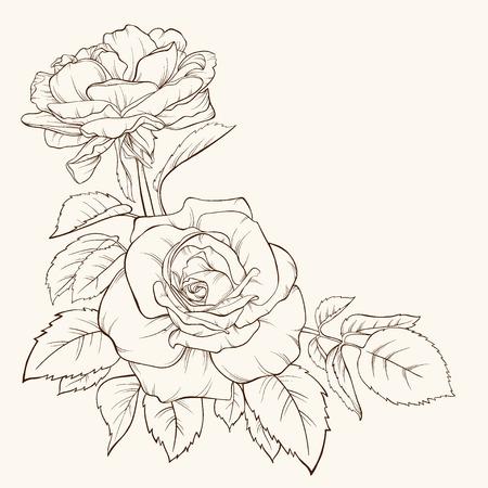 Rosa. Illustrazione vettoriale Linee e tratti di contorno disegnati a mano. Archivio Fotografico - 37153164