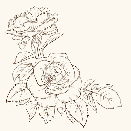 Rose. Vector illustration. Hand-drawn contour lines and strokes.