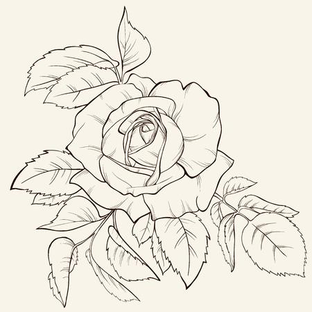 Vintagerose の花。デザインの要素です。手描きの輪郭線とストローク。