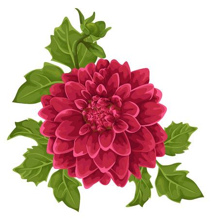 nature one painted: Flower isolated. Dahlia. Illustration