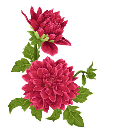 painted image: Flower isolated. Dahlia. Illustration