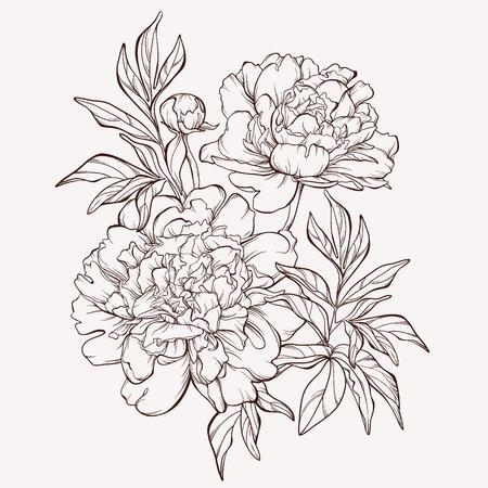 春の牡丹の花。  イラスト・ベクター素材