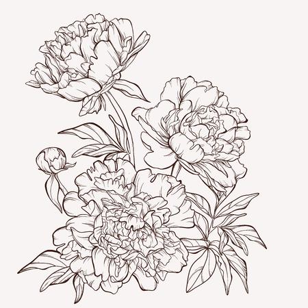 dessin au trait: Blossoming fleurs de pivoine sur blanc.