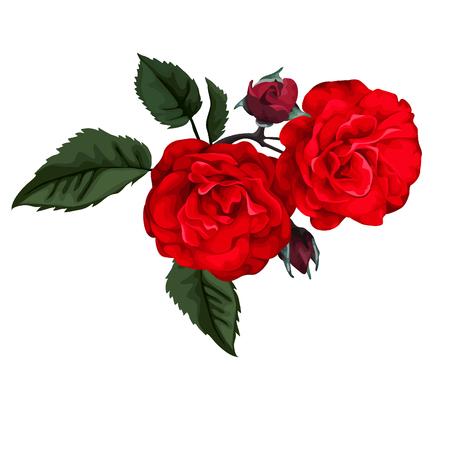 Rote Rose. Perfekt für Hintergrund Grußkarten und Einladungen der Hochzeit, Geburtstag, Valentinstag, der Tag der Mutter. Standard-Bild - 64611877