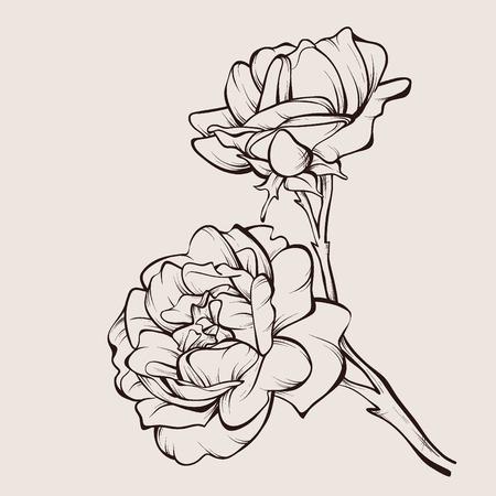 벡터 흰색 배경에 고립 된 장미 꽃입니다. 디자인 요소입니다. 손으로 그린 등고선과 뇌졸중.