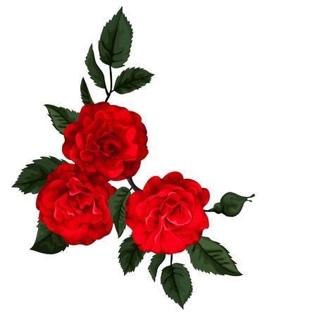 아름다운 장미, 화이트에 격리입니다. 붉은 장미. 일러스트