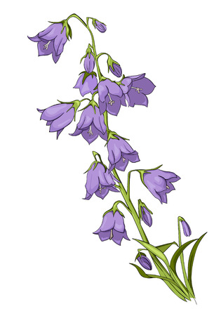 Vector drawing flower flowers, isolated floral element, hand drawn botanical illustration.