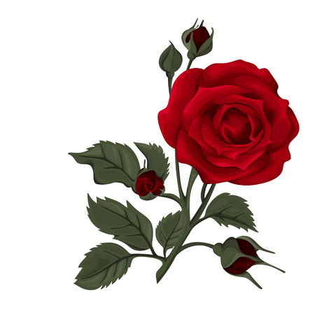 Beautiful rose isolated on white. Red rose. Perfect for background greeting cards and invitations of the wedding, birthday, Valentines Day, Mothers Day. Illustration