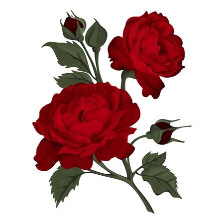Hermosa rosa aislada en blanco. Rosa roja. Perfecto para tarjetas de felicitación de fondo e invitaciones de boda, cumpleaños, San Valentín, Día de la Madre.