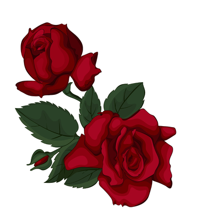 Beautiful rose isolated on white. Red rose. Perfect for background greeting cards and invitations of the wedding, birthday, Valentines Day, Mothers Day. Ilustrace