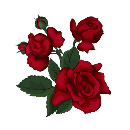 Rosas aisladas en blanco hermoso. Rosa roja. Perfecto para tarjetas de felicitación de fondo e invitaciones de la boda, cumpleaños, día de San Valentín, día de la madre.