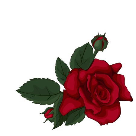 Rose isolated on white beautiful. Red rose. Perfect for background greeting cards and invitations of the wedding, birthday, Valentine's Day, Mother's Day.