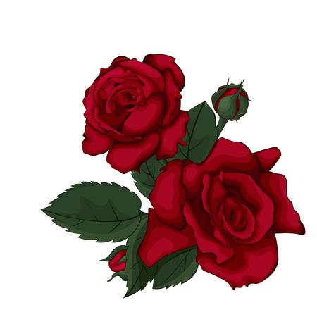 Rose aislado en blanco hermoso. Rosa roja. Perfecto para tarjetas de felicitación de fondo e invitaciones de la boda, cumpleaños, día de San Valentín, día de la madre.